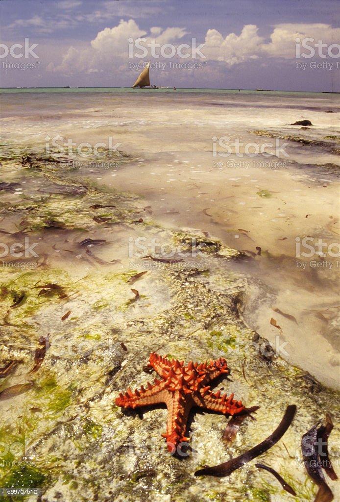 Red starfish on the shores of Diani beach, Kenya stock photo