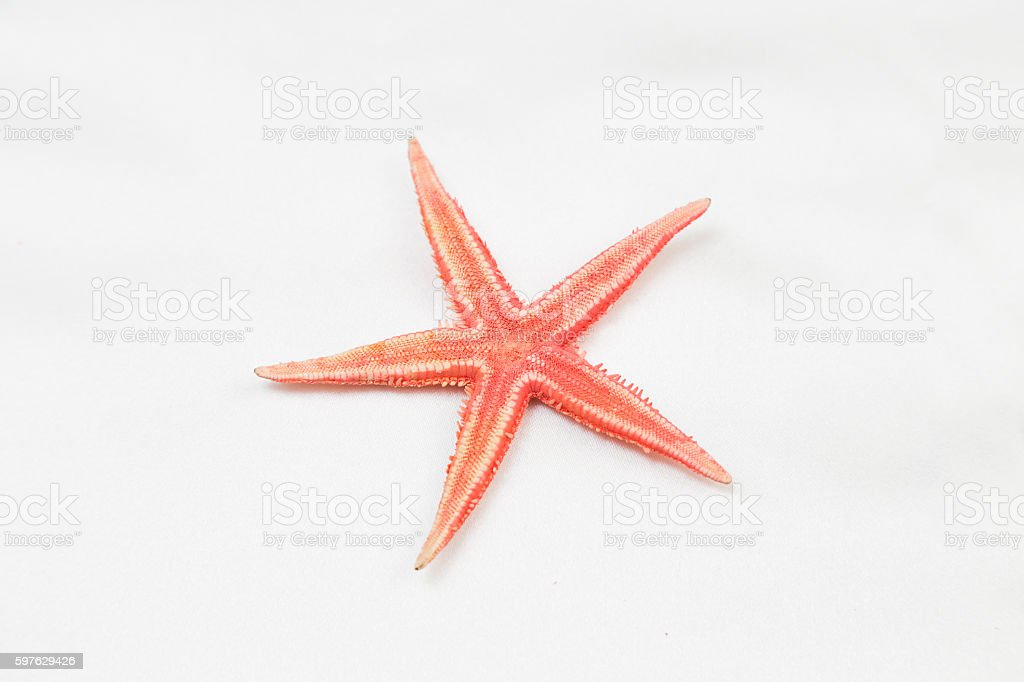 Red starfish or sea star on white background, top view stock photo