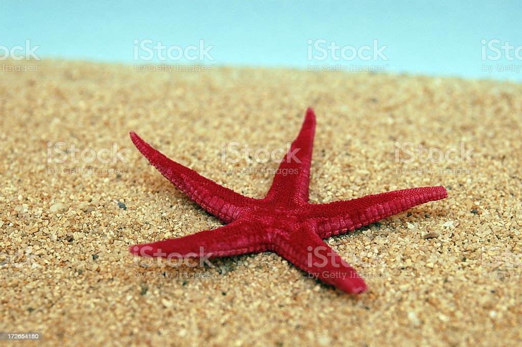 Red starfish royalty-free stock photo
