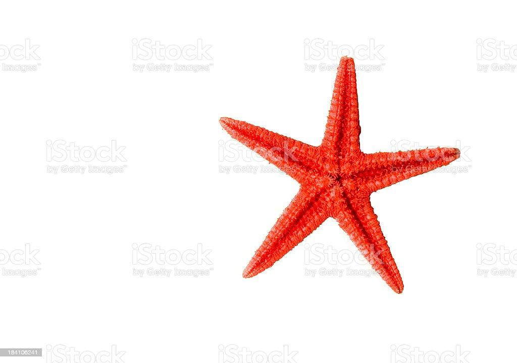Red Starfish royalty-free stock photo