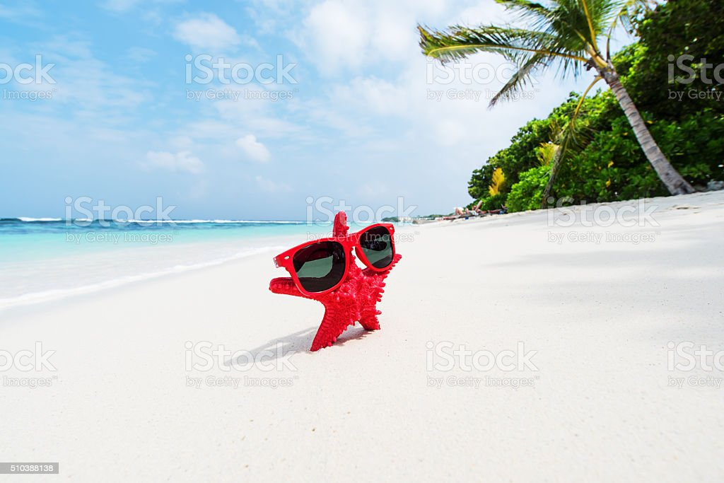 Red starfish standing on tropical beach with sunglasses stock photo