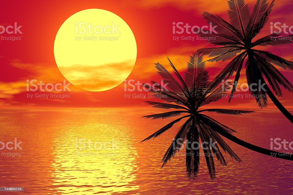 red sunset and palm royalty-free stock photo