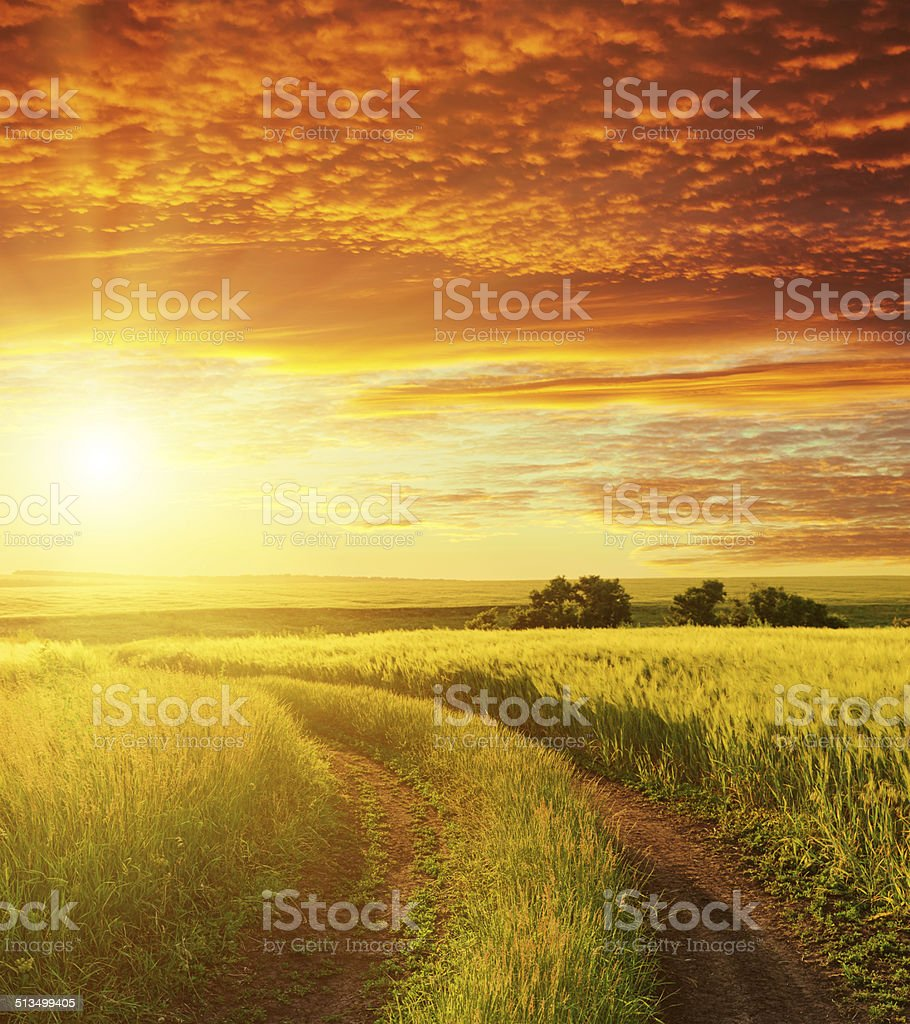 red sunset and road in green field stock photo