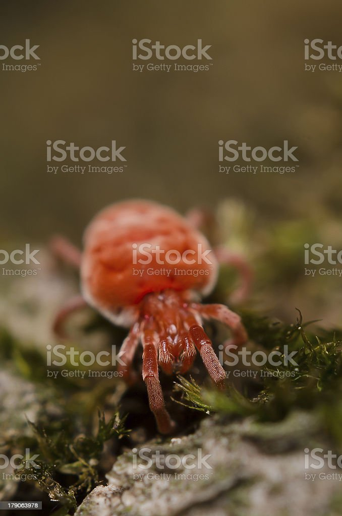 Red tick royalty-free stock photo