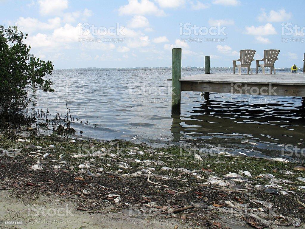 Red tide fish kill stock photo
