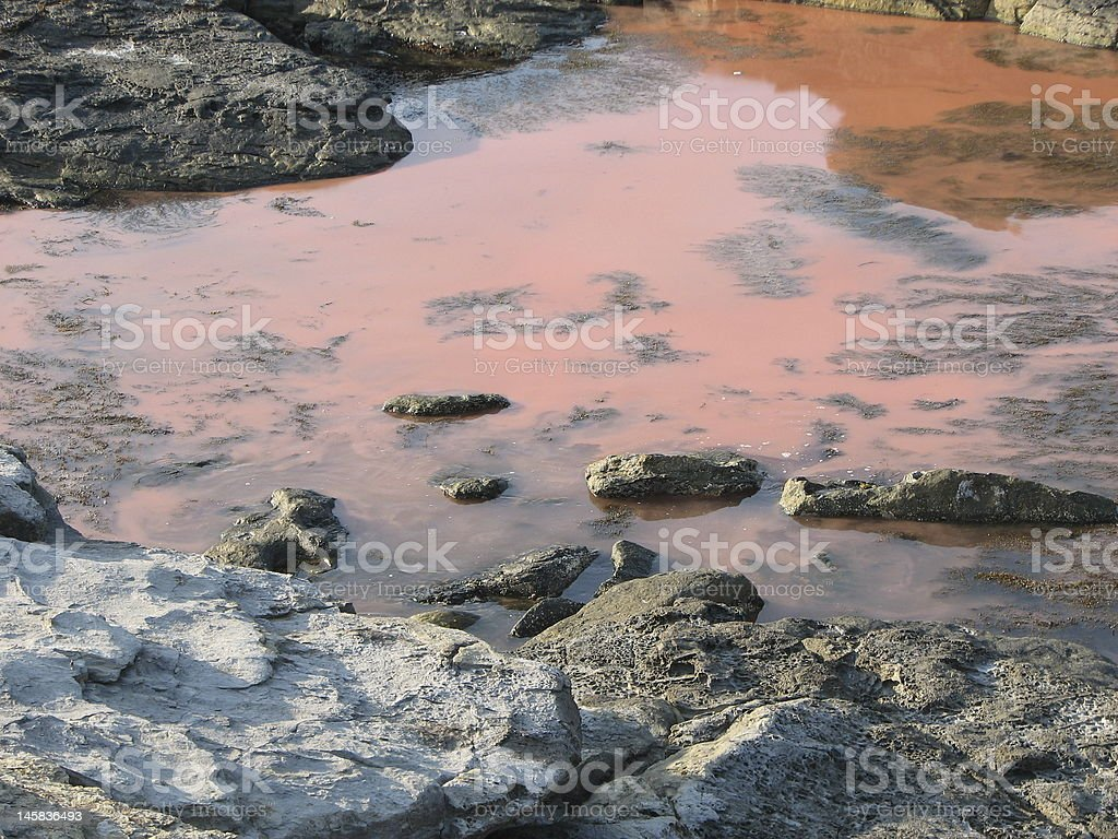 Red Tide royalty-free stock photo