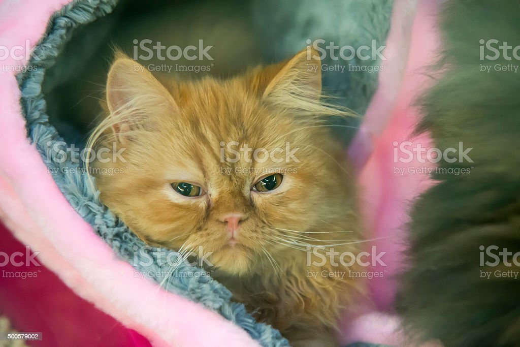 red tired cat stock photo
