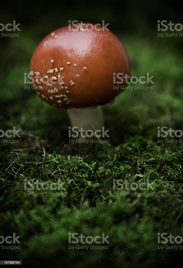 Red Toadstool and Moss Aerial View stock photo
