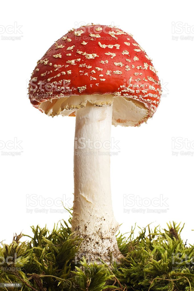 Red toadstool and moss on white background royalty-free stock photo