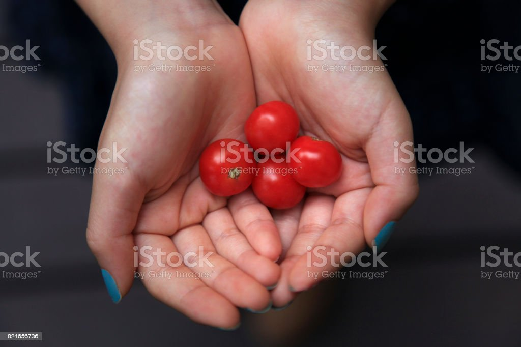 Red Tomatoes in Hands stock photo