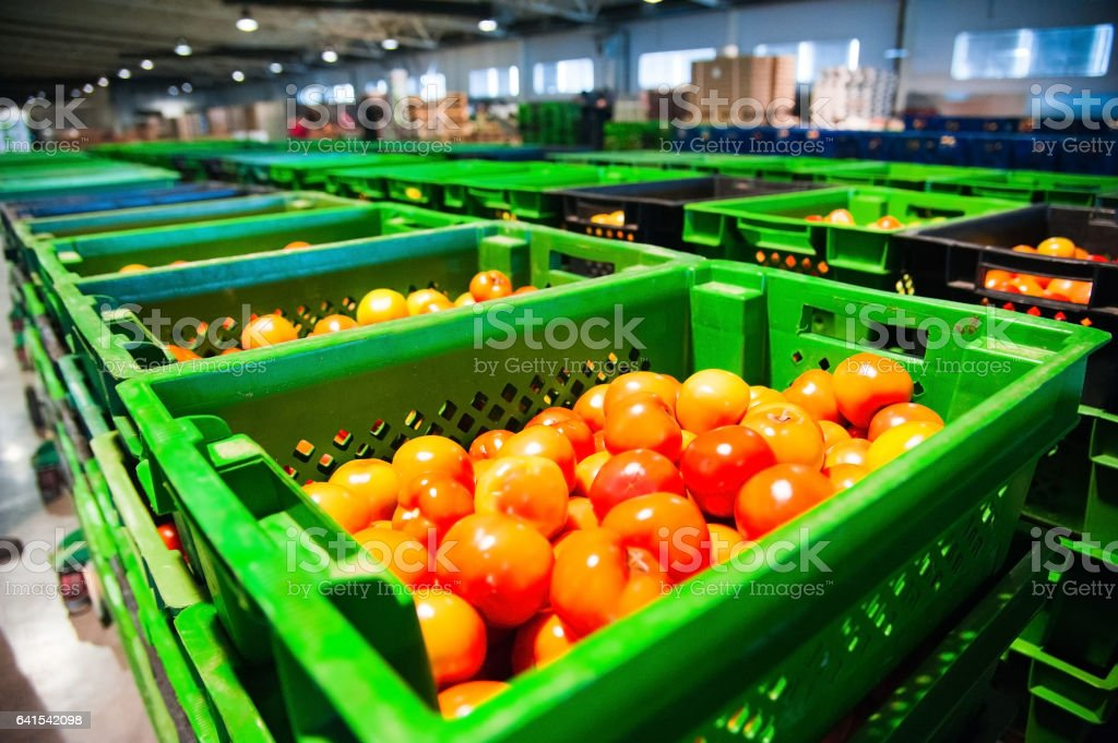 Red tomatoes on vegetable processing factory stock photo