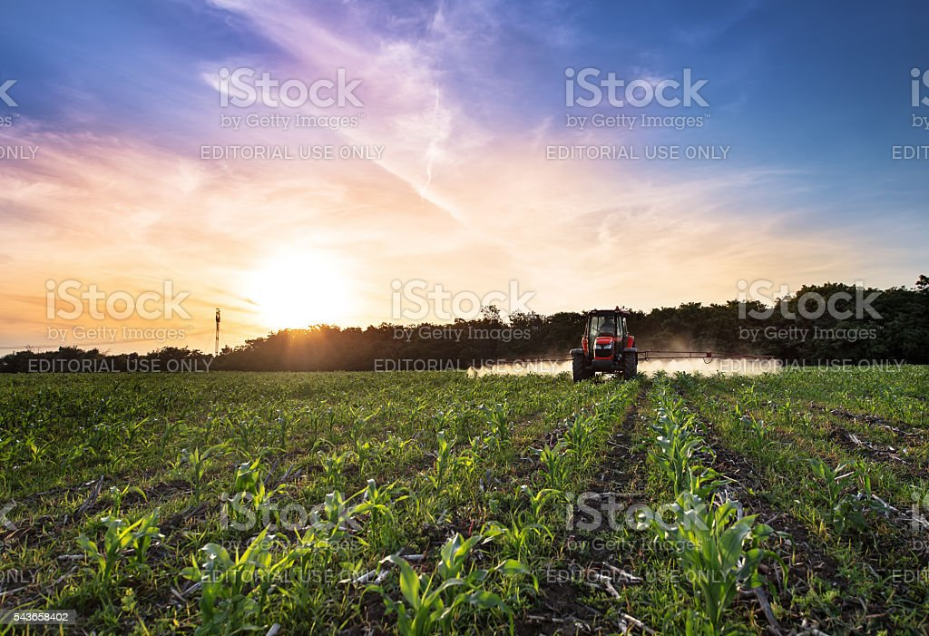 Red tractor in corn. stock photo