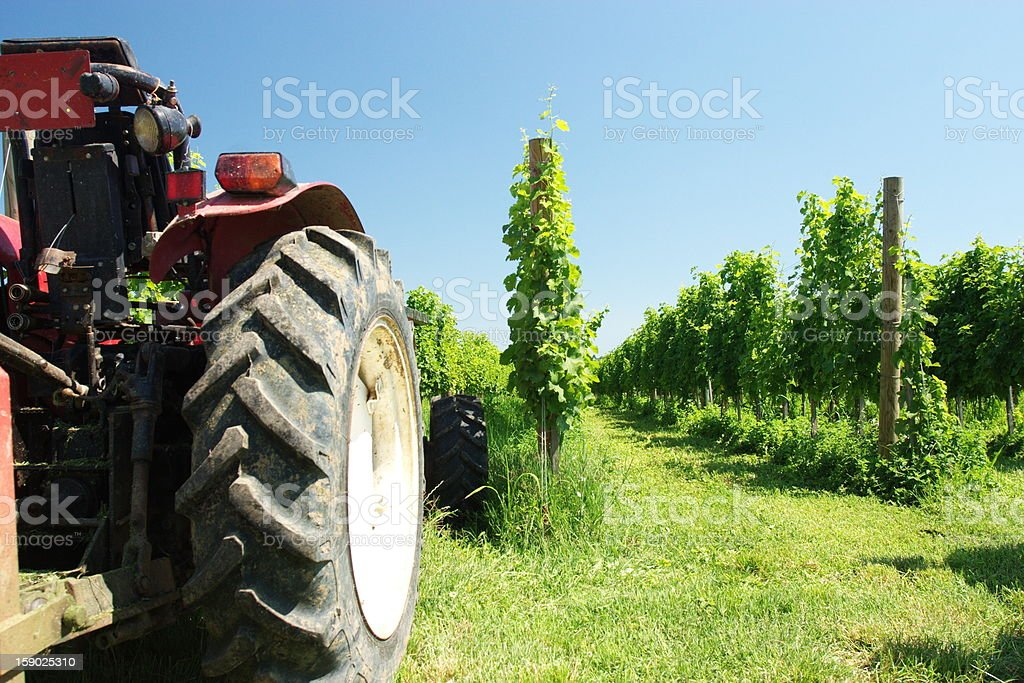 red tractor in vineyard royalty-free stock photo
