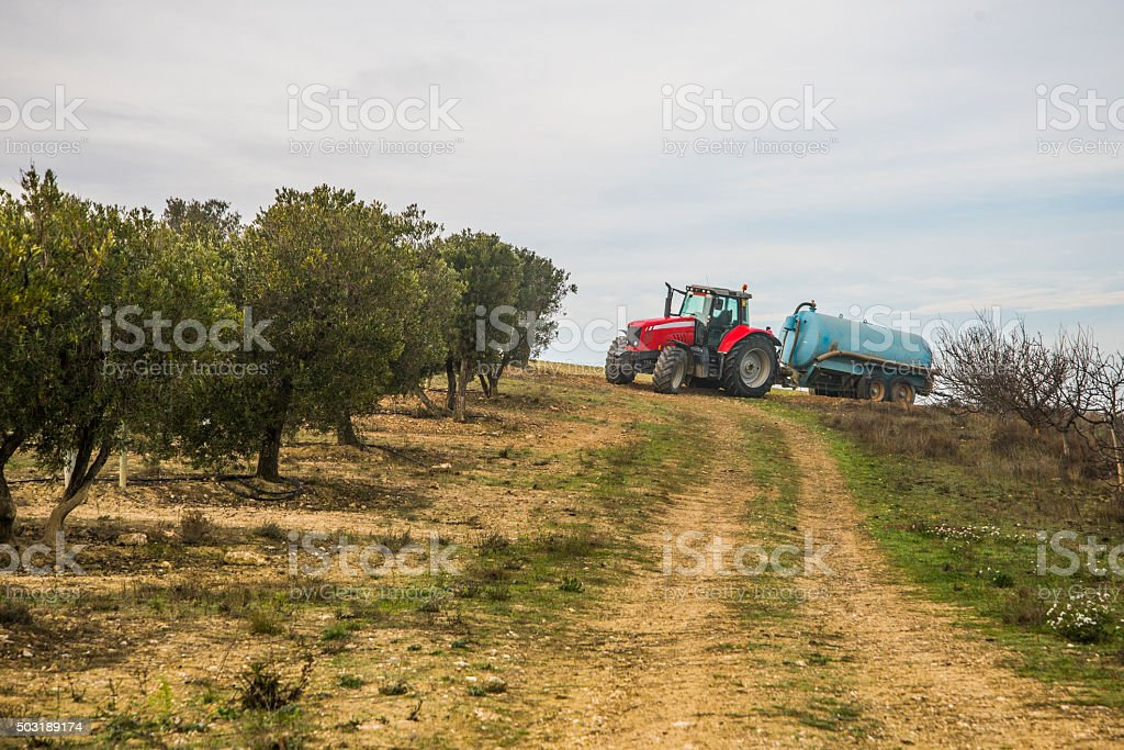Red Tractor on olive field stock photo