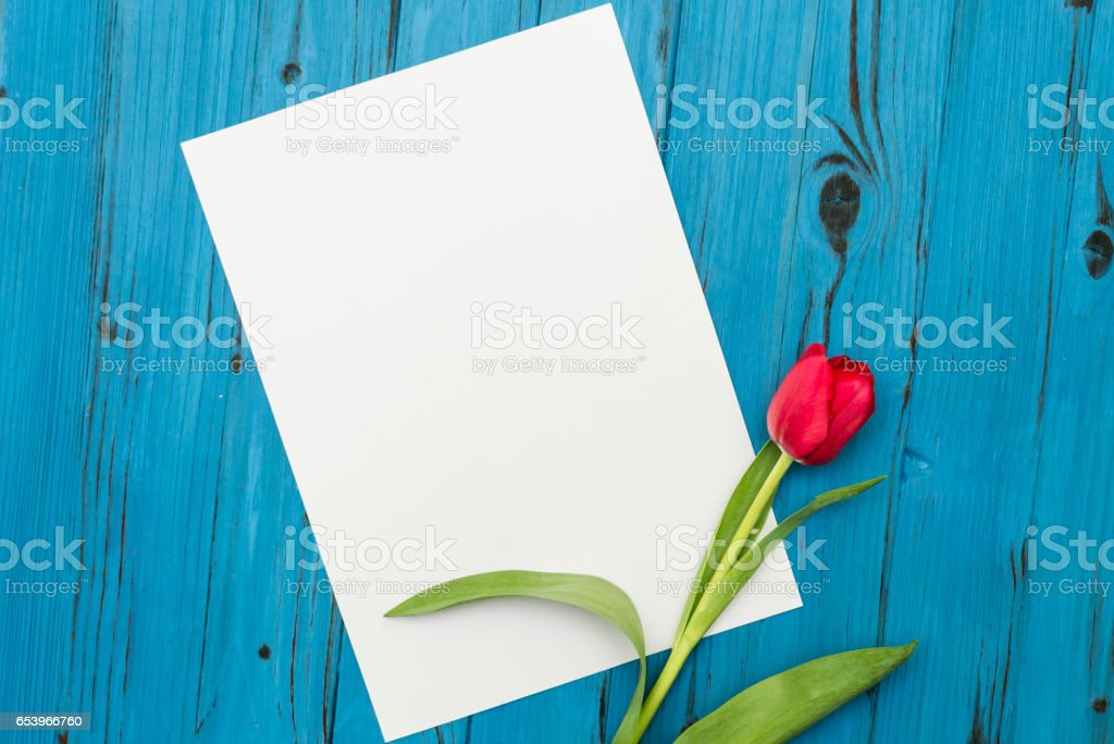 red tulip on a blue wooden board stock photo