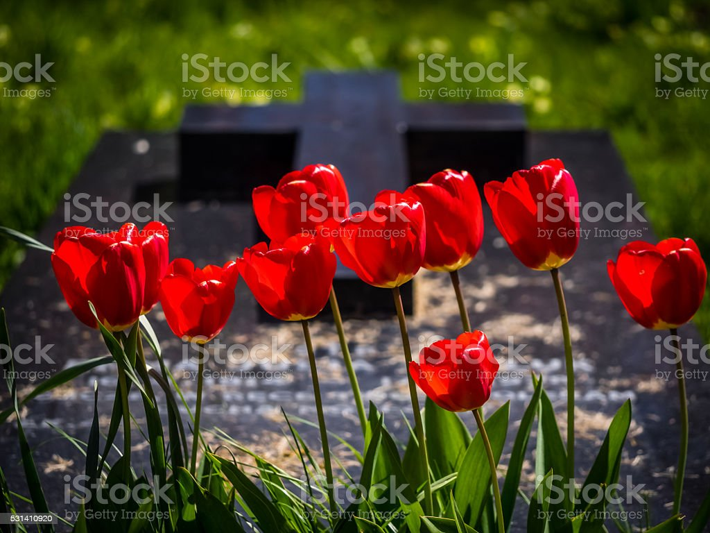 Red tulips and a grave stock photo