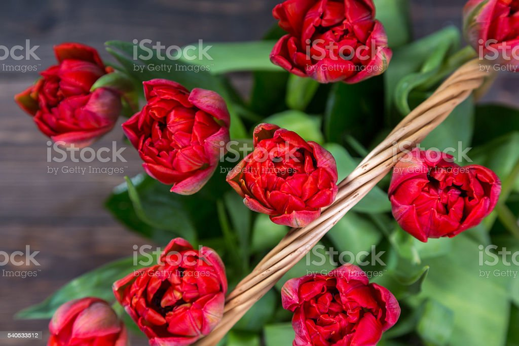 Red Tulips In Basket stock photo