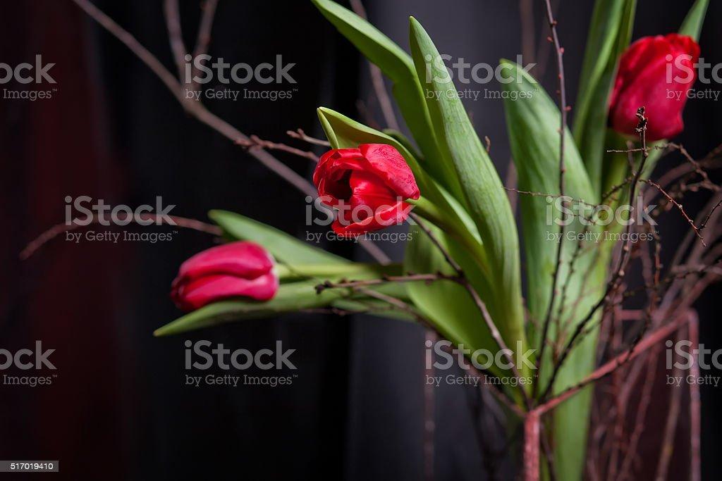 Red tulips on black background. Soft fokus stock photo