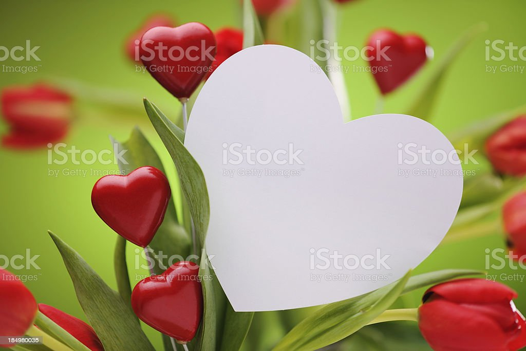 Red tulips with heart shaped empty card royalty-free stock photo