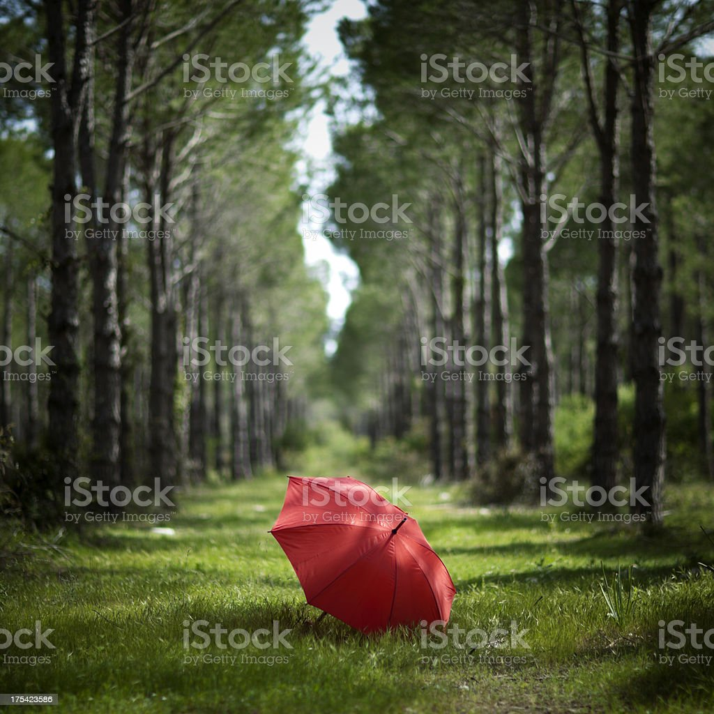 Red umbrella in forest royalty-free stock photo