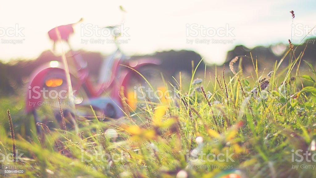 Red vintage bicycle in a meadow on a sunny day stock photo