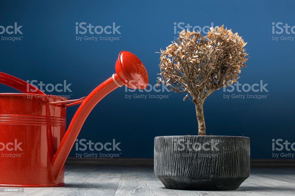 Red Watering Can Beside Dried Bonsai Tree On The Floor stock photo