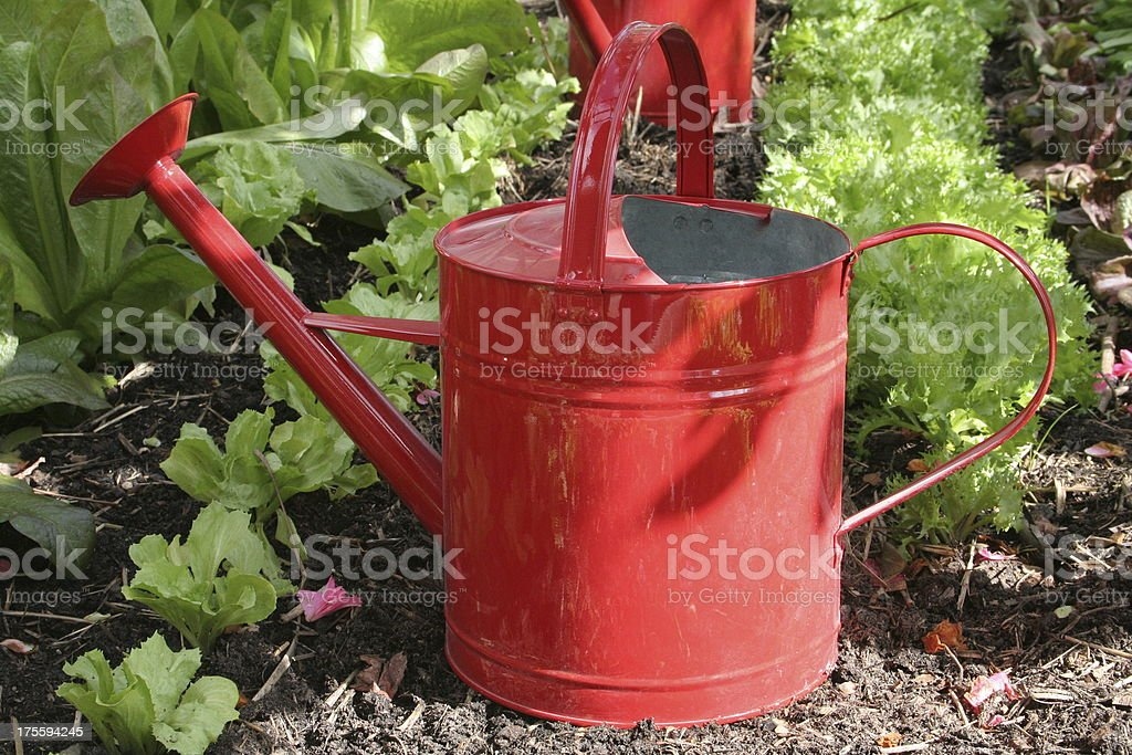 Red watering can royalty-free stock photo