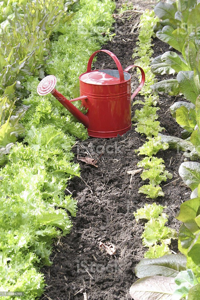 Red Watering Can vertical royalty-free stock photo