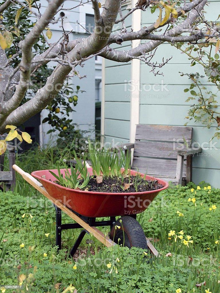 Red Wheelbarrow and Bulbs stock photo