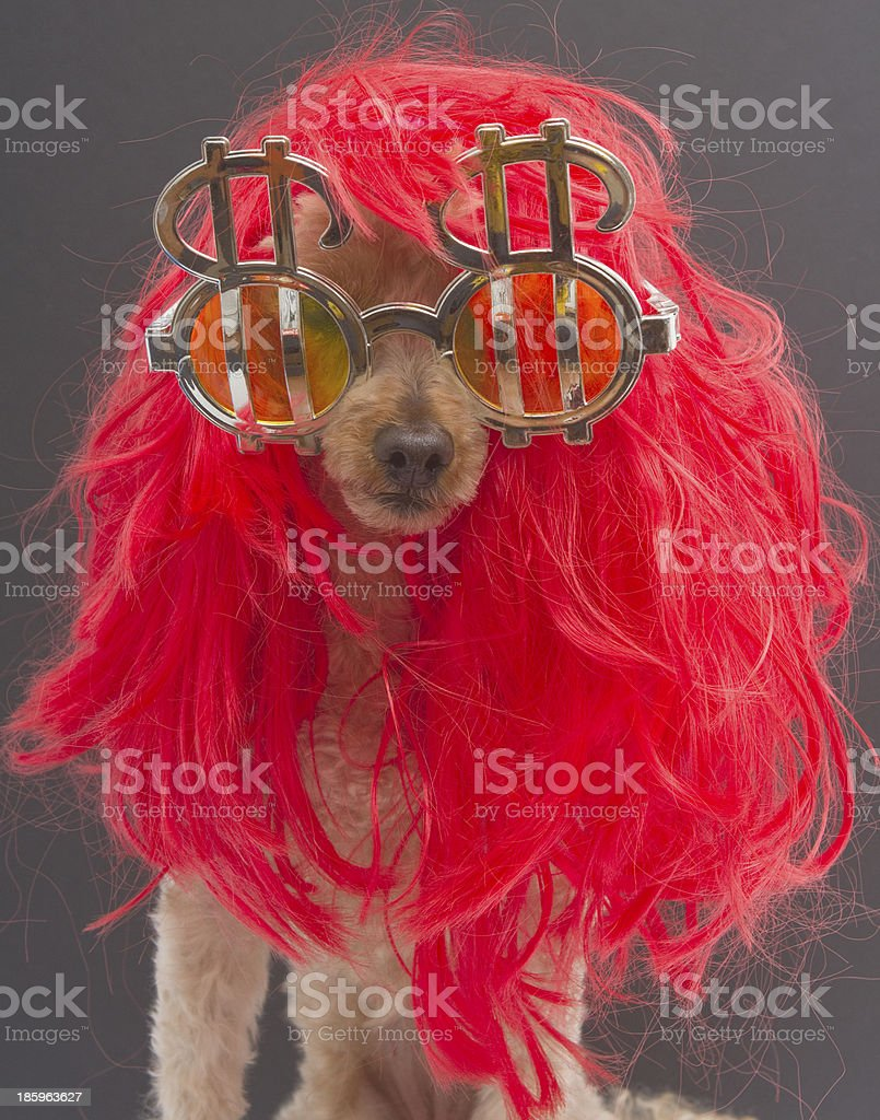 Red Wig and Dollar Signs royalty-free stock photo
