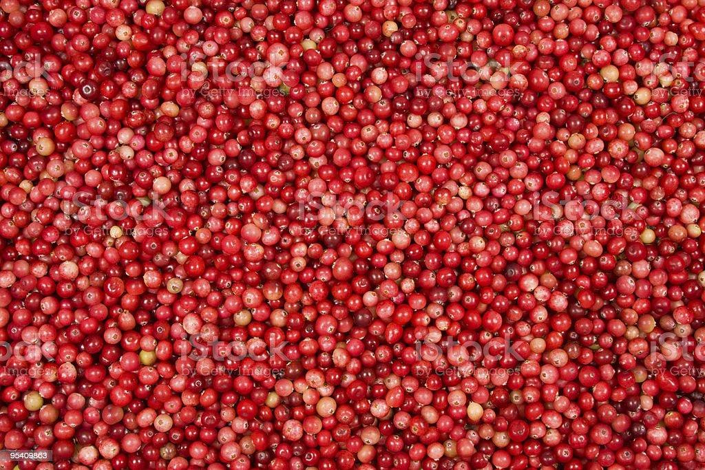 Red wild cranberries stock photo