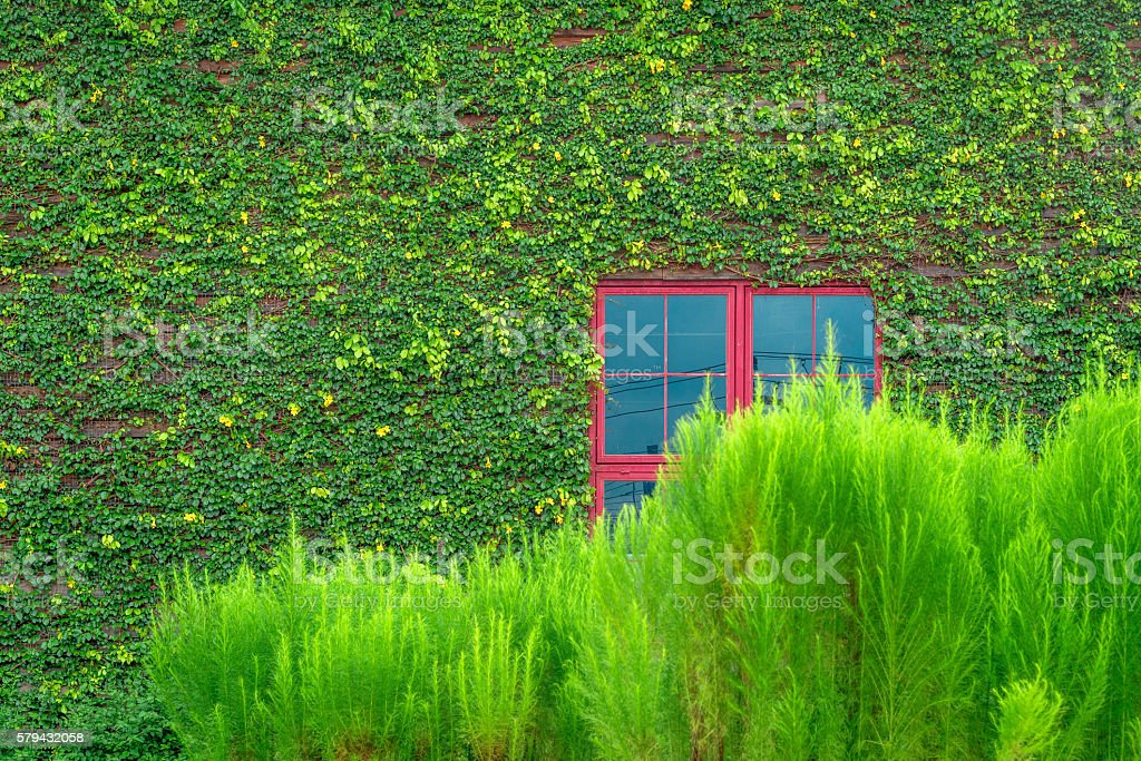 Red window on wall covered with vines photo libre de droits