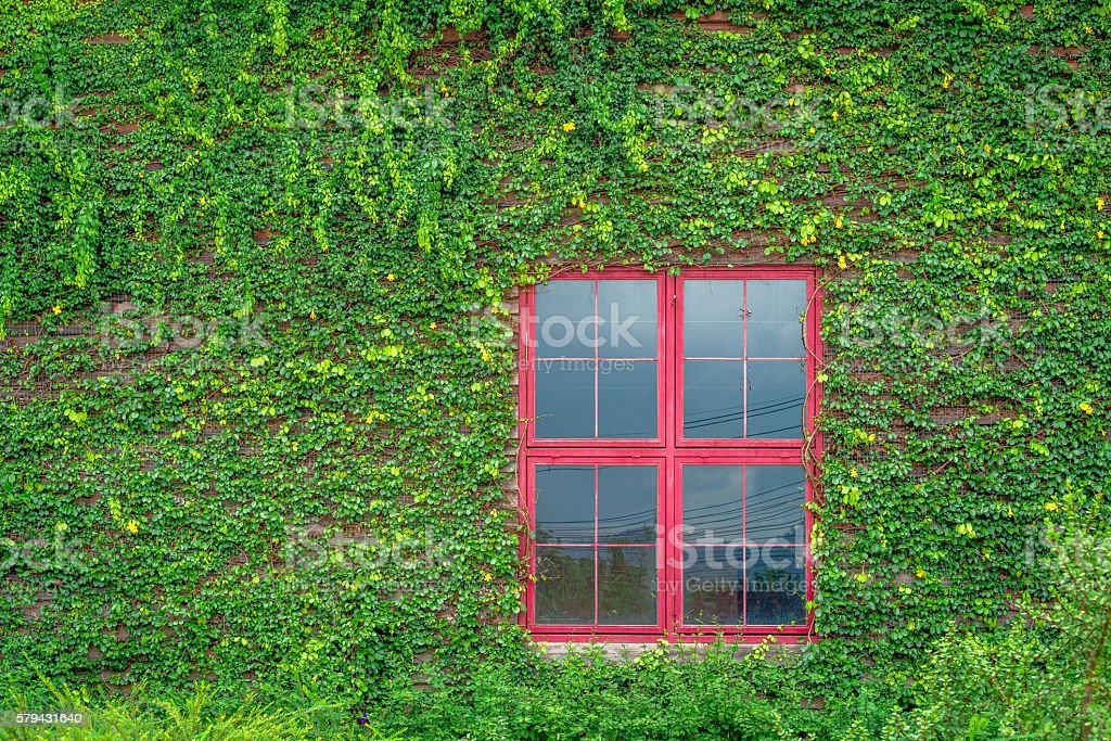 Red window on wooden wall covered with vines photo libre de droits