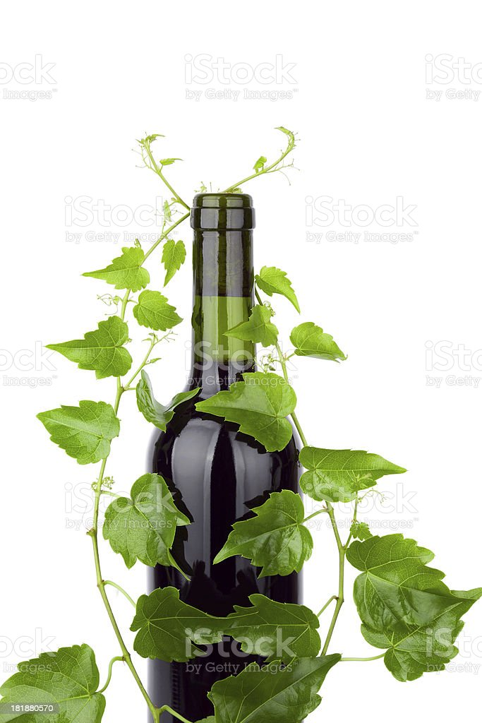 Red Wine and grape leaves isolated on white background stock photo