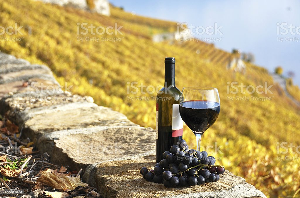 Red wine and grapeson the terrace vineyard royalty-free stock photo