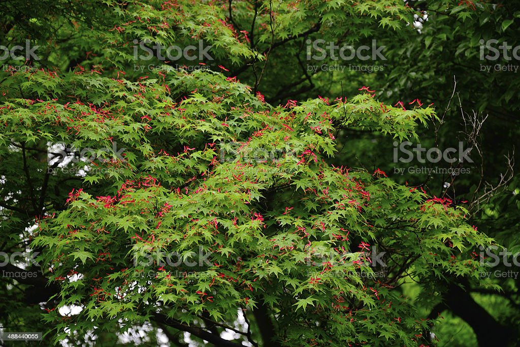 Red wings flutters on the tree royalty-free stock photo