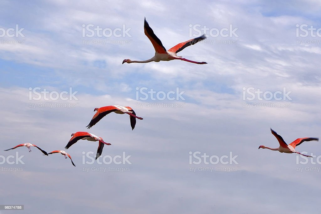 Red wings stock photo