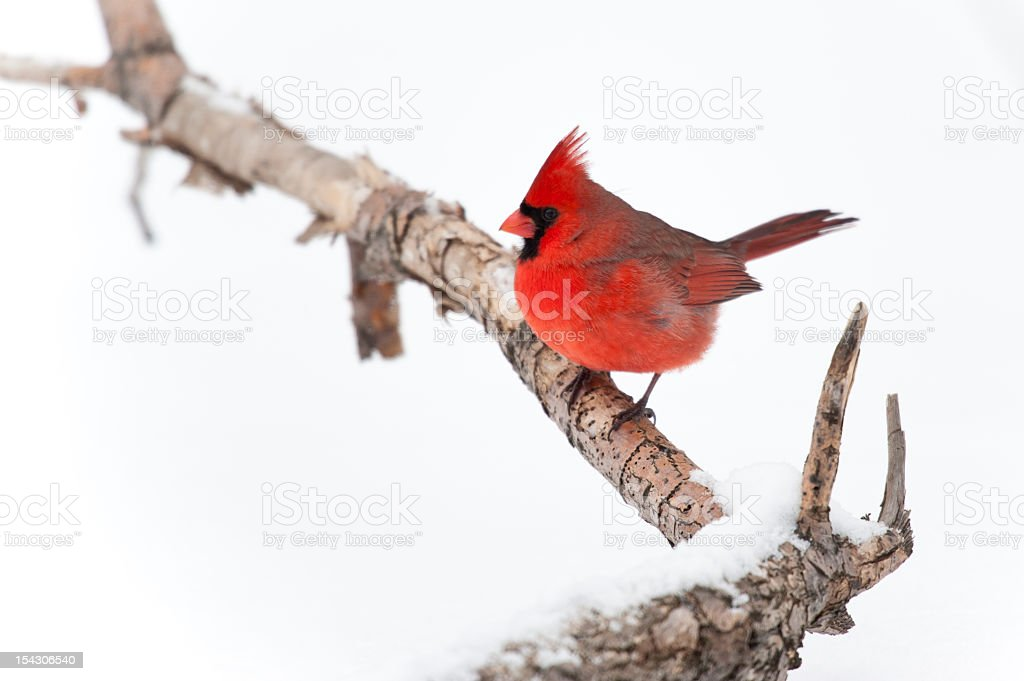 Red Winter stock photo