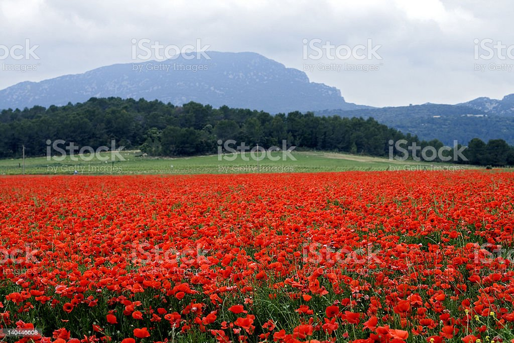 Red with Poppies royalty-free stock photo