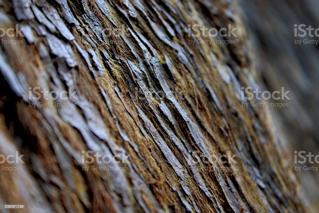Red Wood Forest Tree Bark stock photo