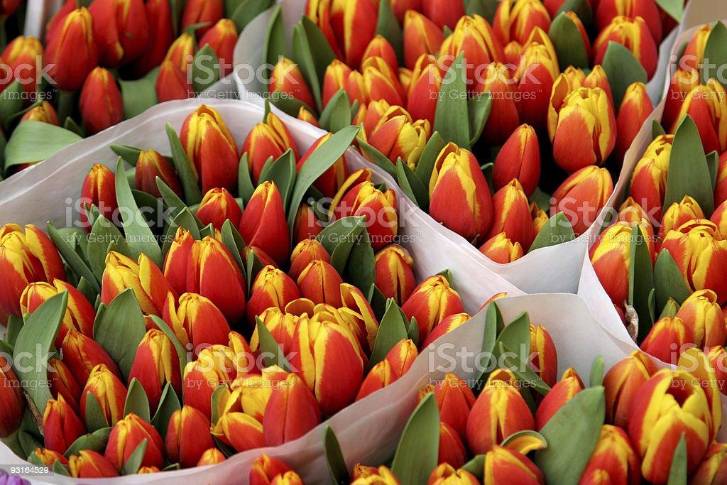 Red & Yellow Tulips stock photo