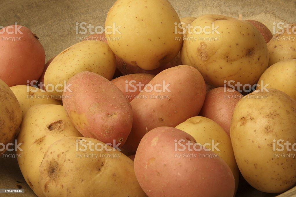 Red & Yukon Potatoes stock photo