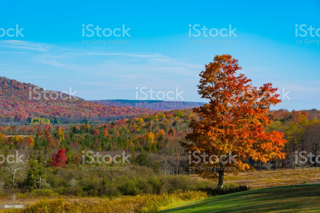 Red-colored tree with a forest in vibrant fall colous in the background stock photo