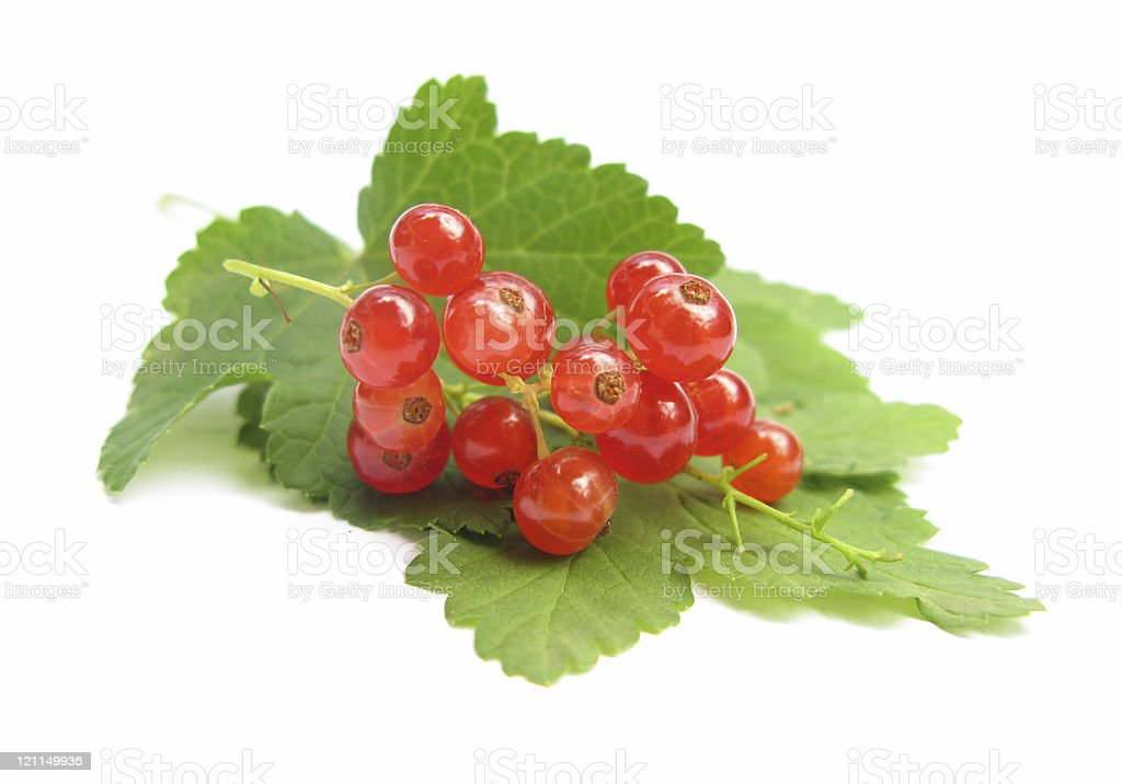 Redcurrant red currants with leaves royalty-free stock photo