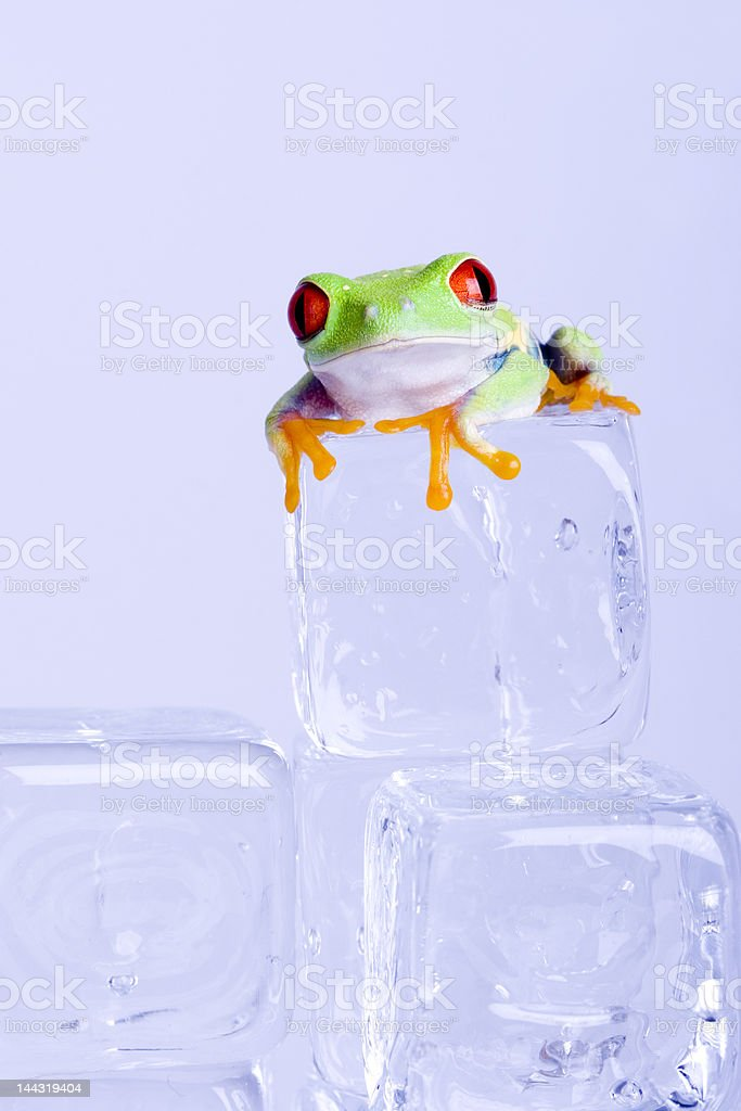 Red-eyed frog stock photo