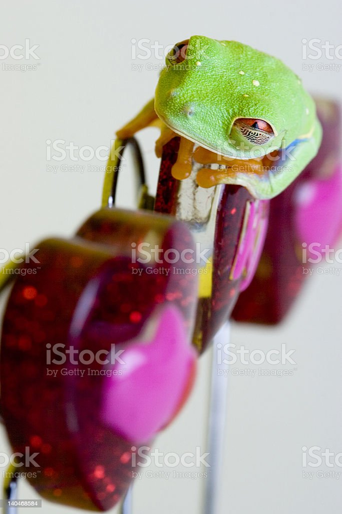 red-eyed tree frog #2 stock photo