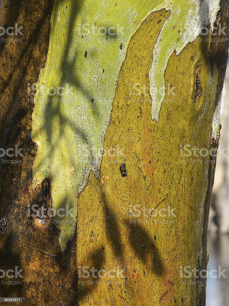 Redgum Bark royalty-free stock photo