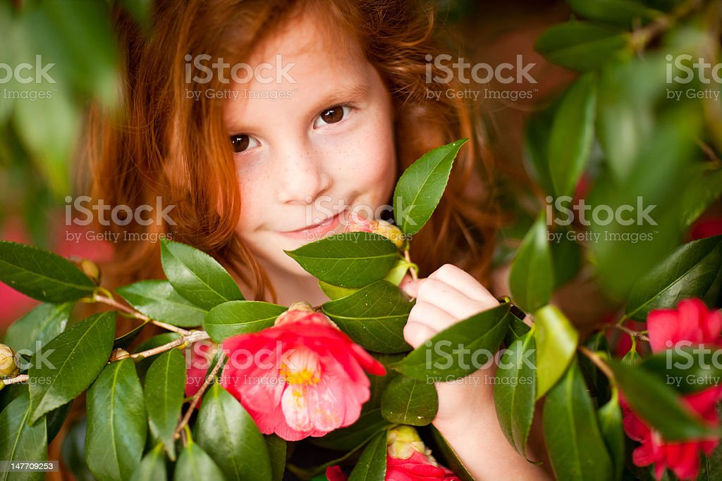 Redhead Beautiful girl looking through red flowers royalty-free stock photo
