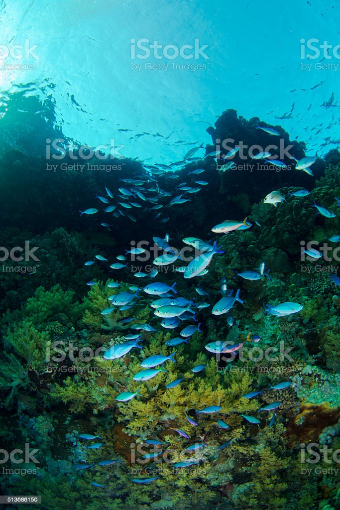 Redsea Coral Reef stock photo
