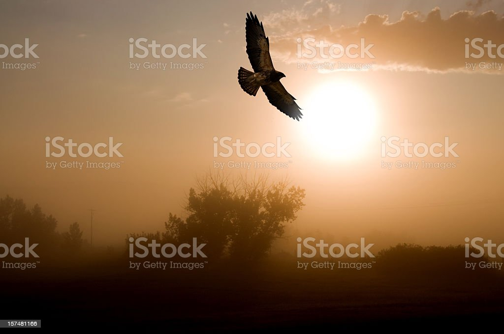 Red-tailed Hawk and a Misty Morning Sunrise. stock photo